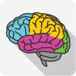 brain_area_focal_epilepsy